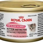 Can-Royal-Canin-Cat-Food