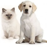 Royal canin starter kits