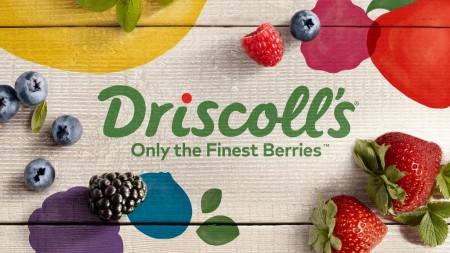 driscolls-berries-for-a-year