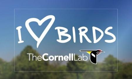 i love birds decal
