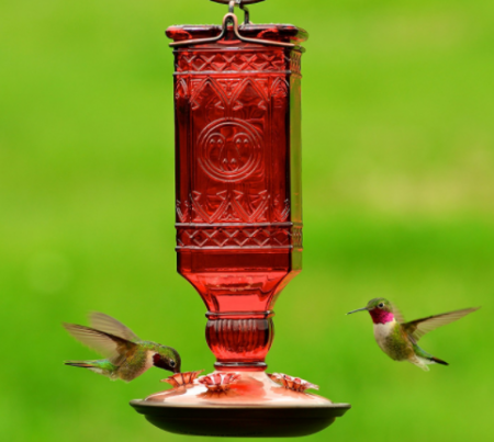 perky pet red squeare bird feeder